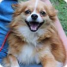 Adopt A Pet :: Grits B