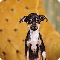 Adopt A Pet :: L.P - Portland, OR