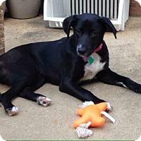 Adopt A Pet :: Jinx - Homer, NY