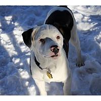 Adopt A Pet :: Forrest - Tempe, AZ