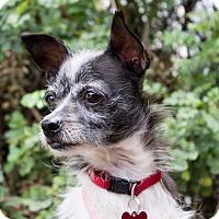 Adopt A Pet :: Sasha - Encino, CA