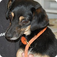 Adopt A Pet :: Christoff - Brooklyn, NY