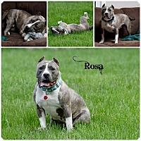 Adopt A Pet :: Rosa - Sioux Falls, SD
