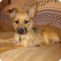 Adopt A Pet :: Ginger - Olive Branch, MS