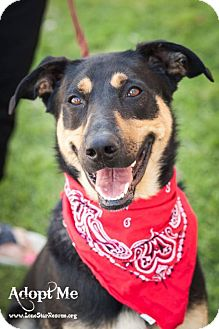 Doberman Pinscher/German Shepherd Dog Mix Dog for adoption in Frisco, Texas - Rebel