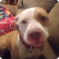 Adopt A Pet :: DIAMOND (ON HOLD) - Upper Sandusky, OH