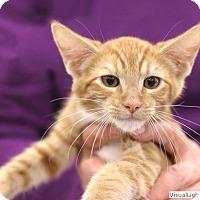 Adopt A Pet :: Harpo - Westchester, CA