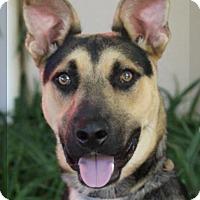 Adopt A Pet :: FRISBEE - Red Bluff, CA
