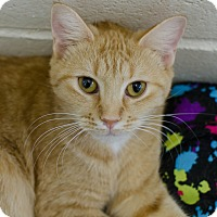Adopt A Pet :: Pippa - Greenwood, SC