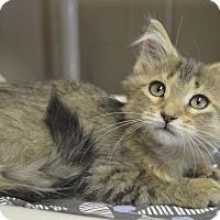 Adopt A Pet :: Shellie - Germantown, TN
