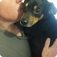 Adopt A Pet :: Taz - Mount Kisco, NY