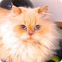 Adopt A Pet :: Susie - Davis, CA