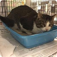 Adopt A Pet :: Bertolt Hoover - Janesville, WI