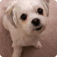 Adopt A Pet :: Bruce - Toronto, ON