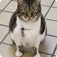 Adopt A Pet :: Monster - Bradenton, FL