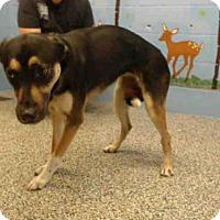 Adopt A Pet :: A501335 - San Bernardino, CA