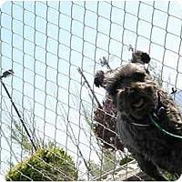 Adopt A Pet :: Saul - Meridian, ID