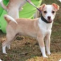 Adopt A Pet :: Luigi - Brattleboro, VT