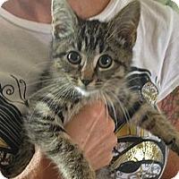 Adopt A Pet :: LuLu - Troy, OH