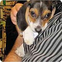 Adopt A Pet :: Earl - Alexandria, VA