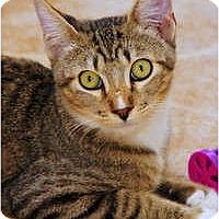 Adopt A Pet :: Rafael - Scottsdale, AZ