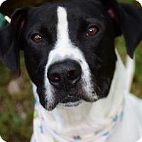 Adopt A Pet :: Fraiser - Bradenton, FL