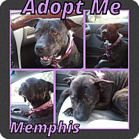 Adopt A Pet :: Memphis - Cheney, KS