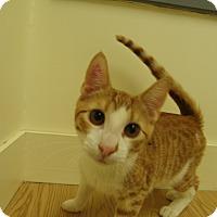 Adopt A Pet :: Uke - Milwaukee, WI