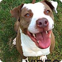 Adopt A Pet :: Gracie Lou - Durham, NC