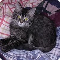 Adopt A Pet :: Sweetie - Encinitas, CA