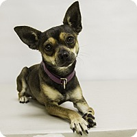Adopt A Pet :: Gordon - Mission Viejo, CA