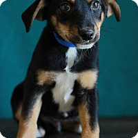 Adopt A Pet :: Kipp - Waldorf, MD