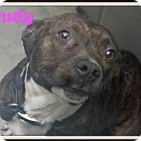 Adopt A Pet :: Trudy - Amory, MS