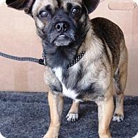 Adopt A Pet :: Benny - Gilbert, AZ
