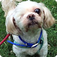 Adopt A Pet :: Fred - St Louis, MO
