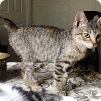 Adopt A Pet :: Delilah - Germantown, MD