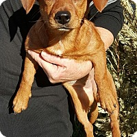 Adopt A Pet :: Leena (URGENT) - Salem, MA
