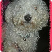 Adopt A Pet :: Adopted!!Bigelow - IL - Tulsa, OK