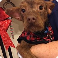 Adopt A Pet :: DARBY - San Juan Capistrano, CA