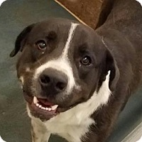 Adopt A Pet :: Beethoven - Fort Smith, AR