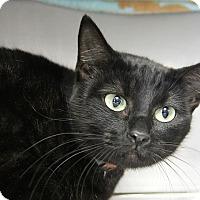 Adopt A Pet :: Pandora - Hawthorne, CA