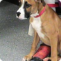 Adopt A Pet :: Travis - Maynardville, TN
