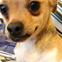Adopt A Pet :: RITA - Anderson, SC