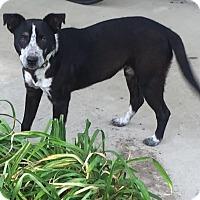 Adopt A Pet :: Birdie - Blountstown, FL