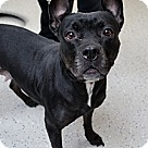 Adopt A Pet :: Wellborn