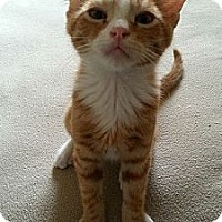 Adopt A Pet :: Chicken - San Diego, CA
