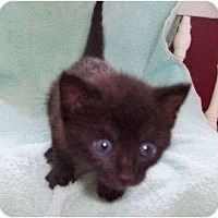 Adopt A Pet :: Sandy--adopted!! - New Richmond, OH