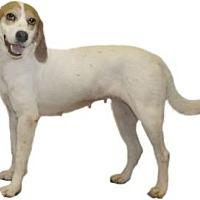 Adopt A Pet :: Sassy - Umatilla, FL