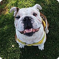 Adopt A Pet :: Punkinella - Santa Ana, CA