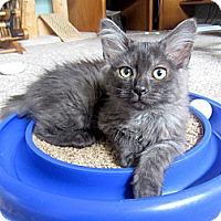 Adopt A Pet :: Kam & Allie - Arlington, VA